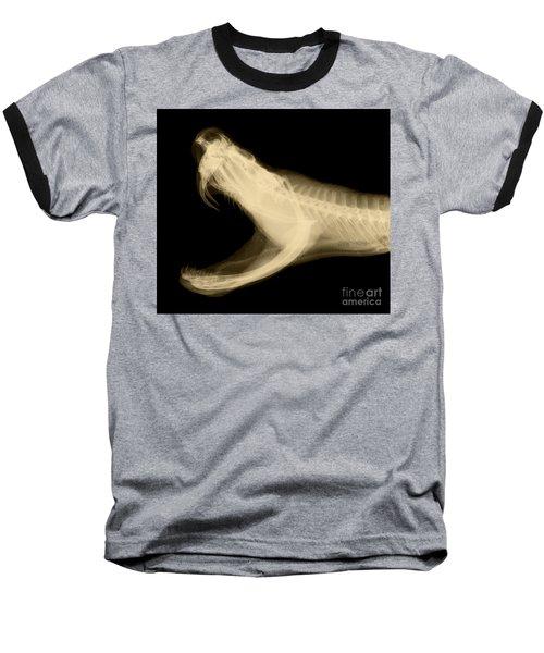 Eastern Diamondback Rattlesnake Baseball T-Shirt by Ted Kinsman