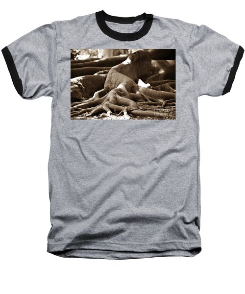 Fig Tree Roots Baseball T-Shirt by Angela Murray
