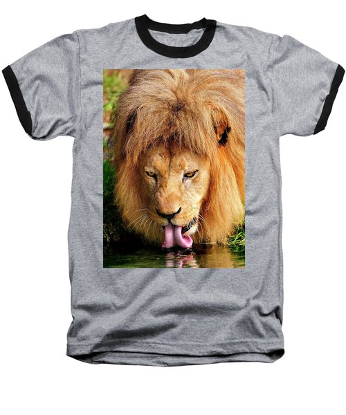 Lion Drinking Baseball T-Shirt