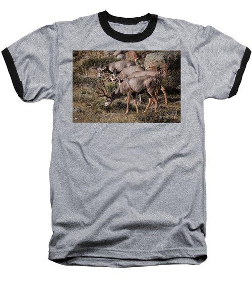 Mule Deer Bucks Baseball T-Shirt by Ronald Lutz