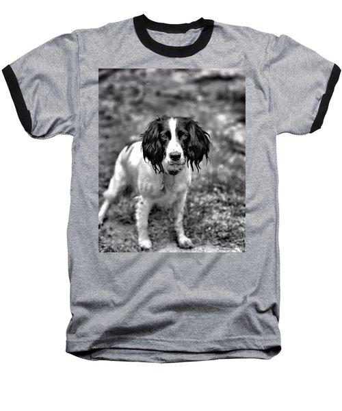 Springer Spaniel Baseball T-Shirt by Marlo Horne