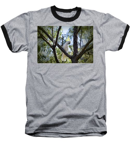 Sulphur Crested Cockatoo Baseball T-Shirt by Douglas Barnard