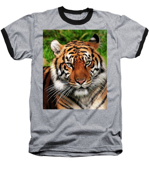 Sumatran Tiger Portrait Baseball T-Shirt