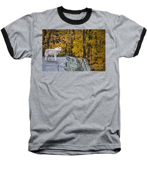 Arctic Wolf Baseball T-Shirt by Michael Cummings