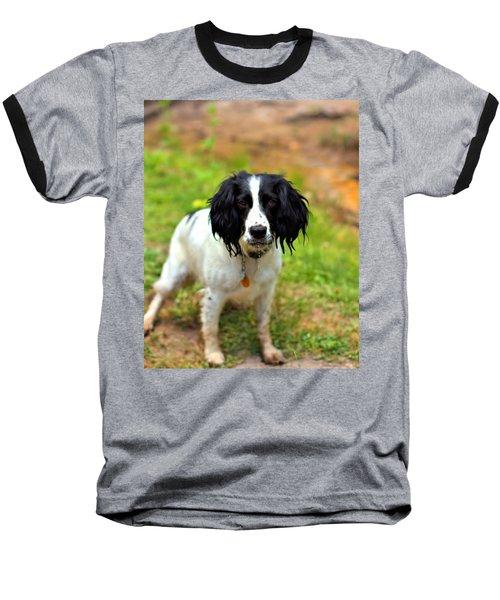 Spaniel Baseball T-Shirt by Marlo Horne