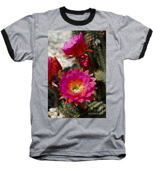 Pink Cactus Flowers Baseball T-Shirt by Jim And Emily Bush