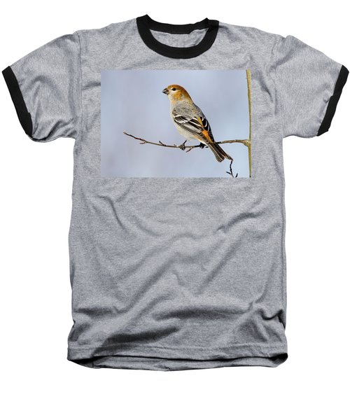 Female Pine Grosbeak Baseball T-Shirt