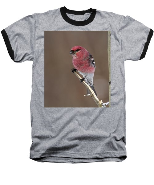 Pine Grosbeak Baseball T-Shirt