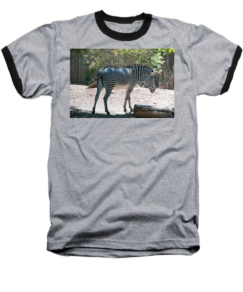 Lincoln Park Zoo In Chicago Baseball T-Shirt by Carol Ailles