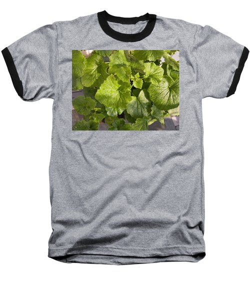 A Green Leafy Vegetable Plant After Watering In Bright Sunrise Baseball T-Shirt by Ashish Agarwal