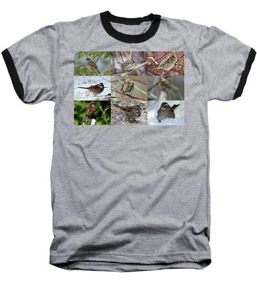 A Study In Sparrows Baseball T-Shirt by Joe Faherty