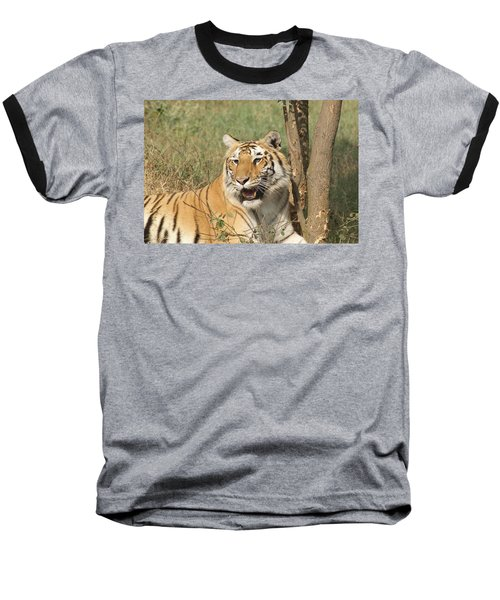 A Tiger Lying Casually But Fully Alert Baseball T-Shirt