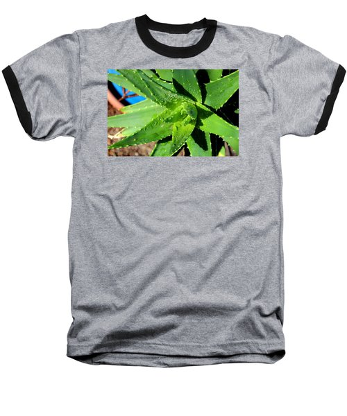 Baseball T-Shirt featuring the photograph Aloe by M Diane Bonaparte
