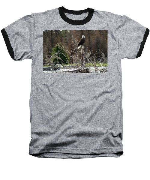 American Eagle On Snake River Baseball T-Shirt by Living Color Photography Lorraine Lynch