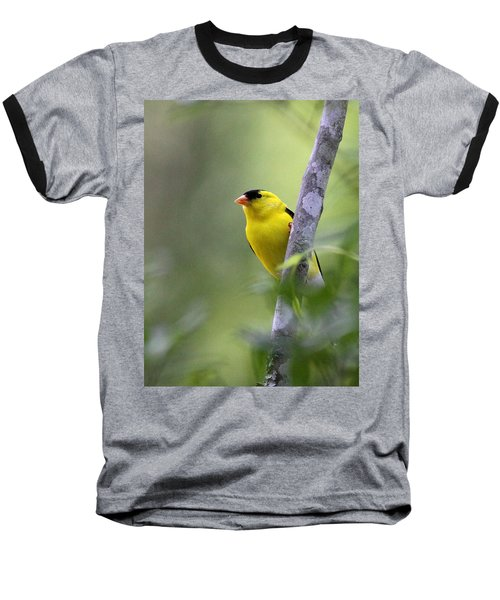 American Goldfinch - Peaceful Baseball T-Shirt by Travis Truelove