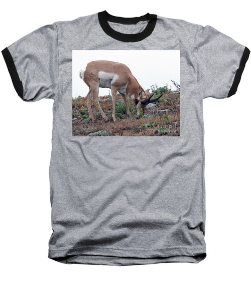 Baseball T-Shirt featuring the photograph Antelope Grazing by Art Whitton
