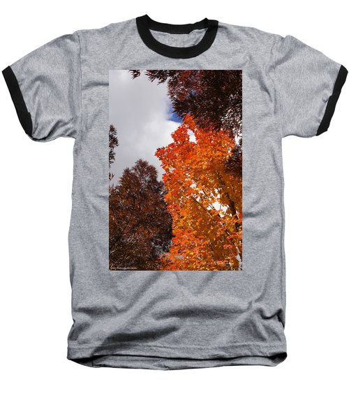 Autumn Looking Up Baseball T-Shirt by Mick Anderson