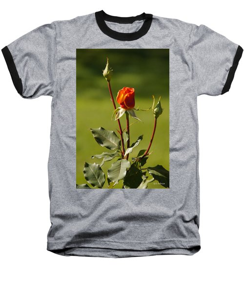 Autumn Rose Baseball T-Shirt by Mick Anderson