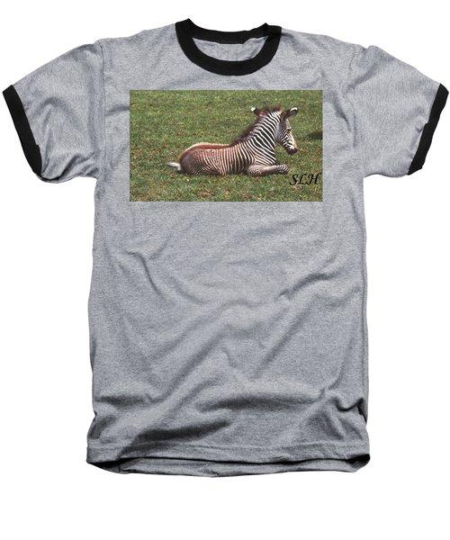 Baby Zebra Baseball T-Shirt