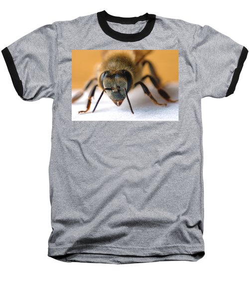 Bee In Macro 4 Baseball T-Shirt