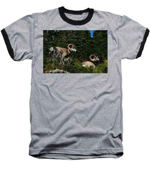 Big Horn Sheep Glacier National Park Baseball T-Shirt