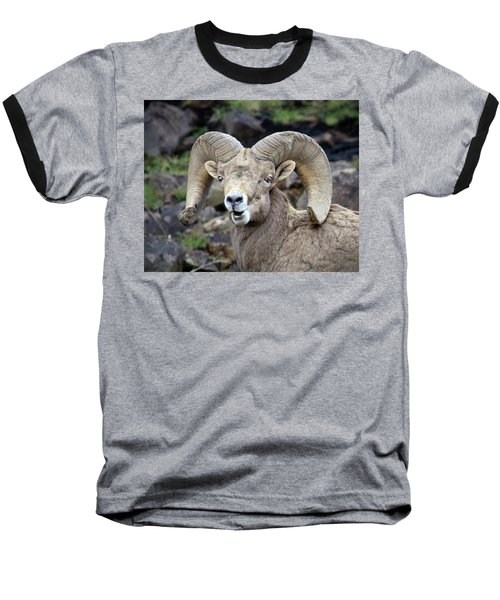 Baseball T-Shirt featuring the photograph Bighorn Giant by Steve McKinzie