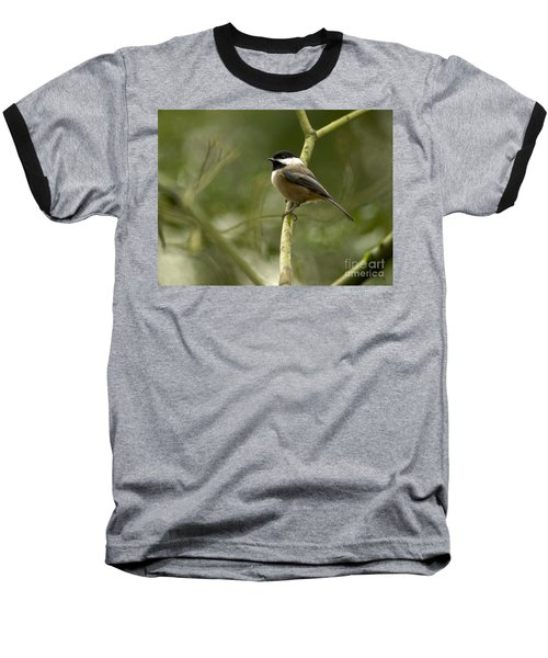 Black-capped Chickadee With Branch Bokeh Baseball T-Shirt