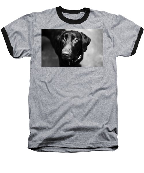 Black Labrador  Baseball T-Shirt by Sumit Mehndiratta