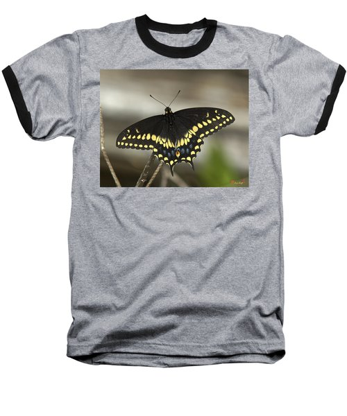 Black Swallowtail Din103 Baseball T-Shirt