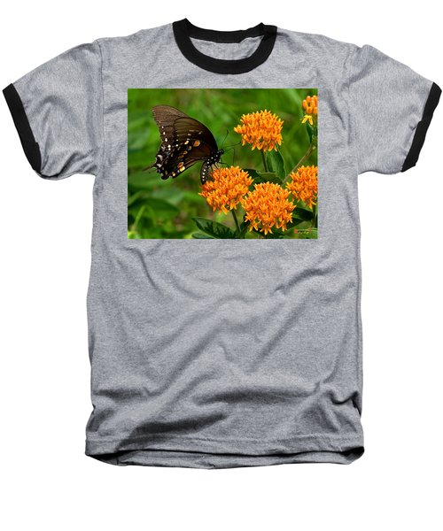 Black Swallowtail Visiting Butterfly Weed Din012 Baseball T-Shirt by Gerry Gantt