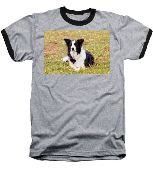 Border Collie In Field Of Yellow Flowers Baseball T-Shirt