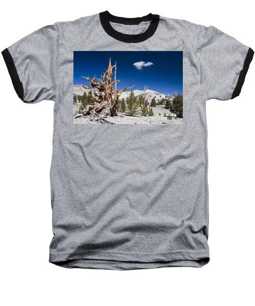 Bristlecone Pine - Pinus Longaeva Baseball T-Shirt