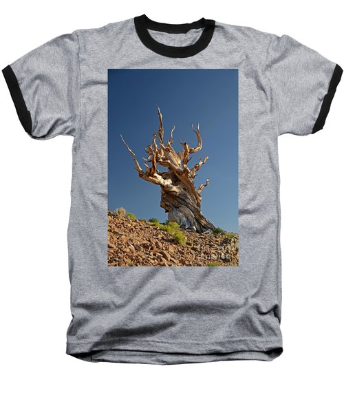 Bristlecone Pine Baseball T-Shirt