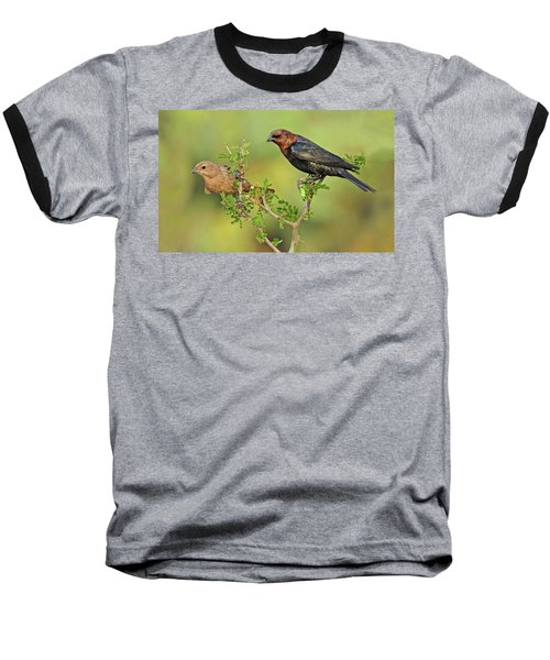 Brown Headed Cowbird Pair Baseball T-Shirt