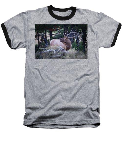 Bugling Bull Elk Baseball T-Shirt by Ronald Lutz