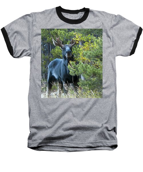 Bull Moose Baseball T-Shirt