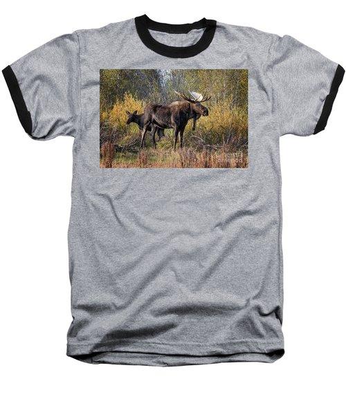 Bull Tolerates Calf Baseball T-Shirt by Ronald Lutz