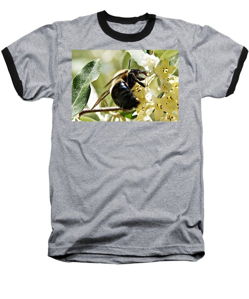 Busy As A Bee Baseball T-Shirt by Joe Faherty
