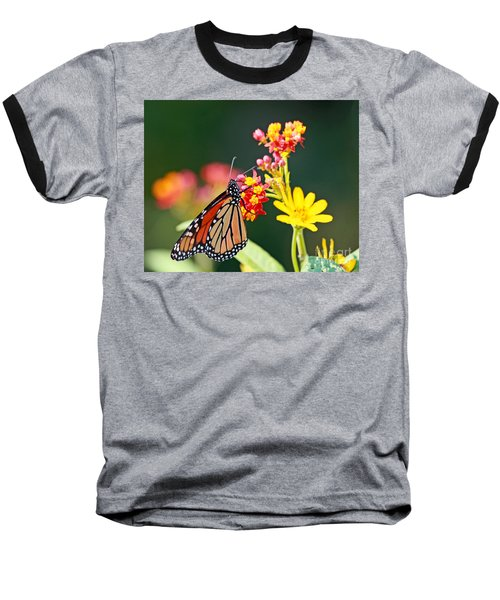 Butterfly Monarch On Lantana Flower Baseball T-Shirt by Luana K Perez