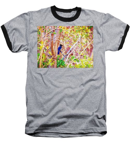 Canyon Jay  Baseball T-Shirt by Clarice  Lakota