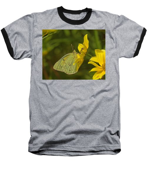 Clouded Sulphur Butterfly Din099 Baseball T-Shirt by Gerry Gantt