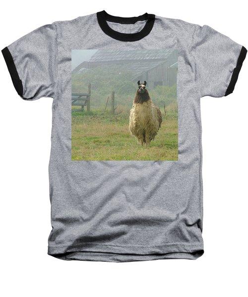 Coast Llama Baseball T-Shirt