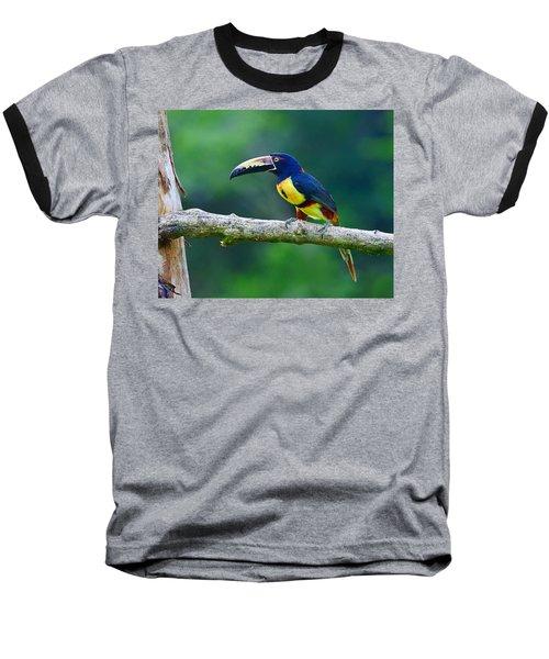 Collared Aracari Baseball T-Shirt