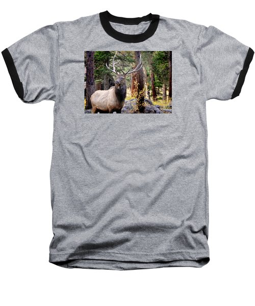 Baseball T-Shirt featuring the photograph Colorado Elk by Nava Thompson