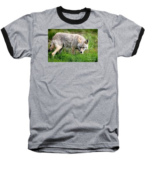 Baseball T-Shirt featuring the photograph Coyote On The Prowl by Kathy  White
