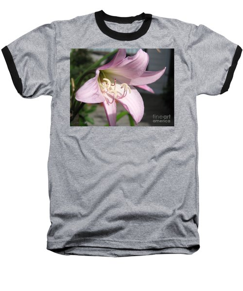 Baseball T-Shirt featuring the photograph Crinum Lily Named Powellii by J McCombie