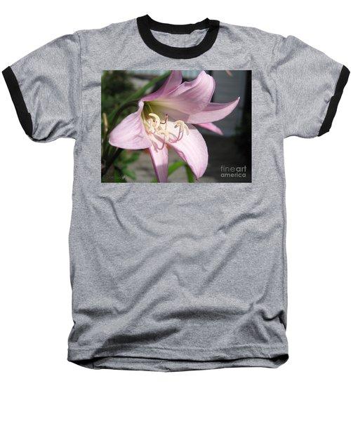 Crinum Lily Named Powellii Baseball T-Shirt by J McCombie