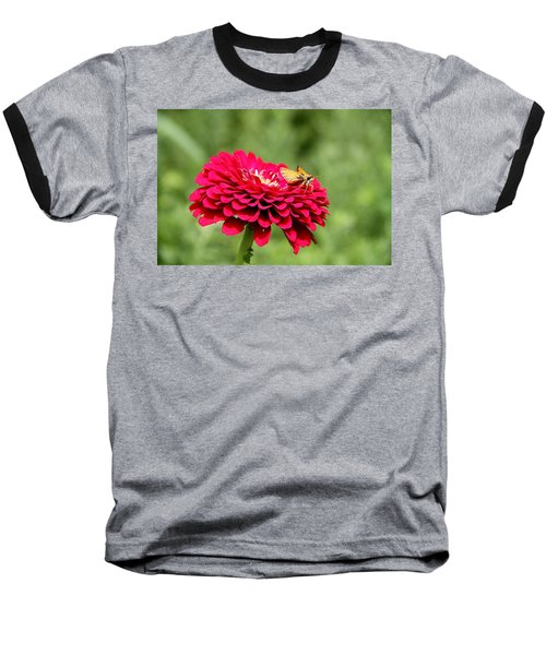 Baseball T-Shirt featuring the photograph Dahlia's Moth by Elizabeth Winter