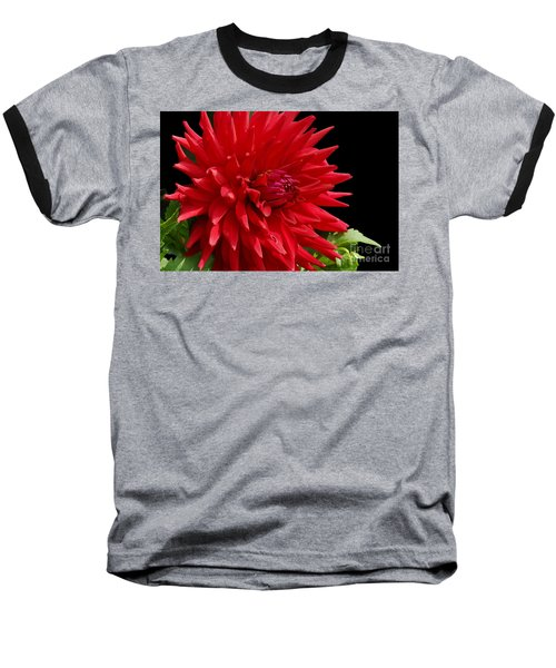 Decked Out Dahlia Baseball T-Shirt by Cindy Manero