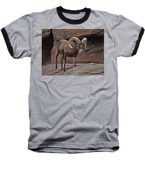 Desert Bighorn Sheep Ram I Baseball T-Shirt